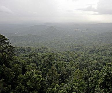 Forest Cover in India increased